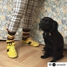 ohoo, naše #ponozkyodbabicky v @botas66 🔥 #Repost @botas66 with @get_repost ・・・ Starting the next week you can get Grandma's socks #ponozkyodbabicky in our stores. Every pair is original as they are knitted by 200 grandmas using recycled wool. By buying them you support a good thing! ❤️ @elpidaproseniory 📷 @sullysundkvist #construct #model #sneakers #classic #botas66 #svoucestou #czech #czechsneakers #botasky #sneaker  #sneakerhead #sneakerfreaker #czechsouvenir #praguesouvenir #pragueshopping #newshoes #boty #shoes #shoeholic #fashion #czechfashion #czechdesigner  #charity #goodwill #grandma #socks #yellow #colour